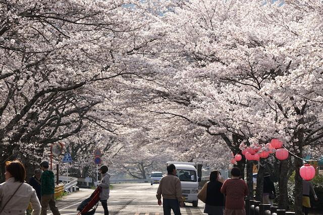 0329桜1