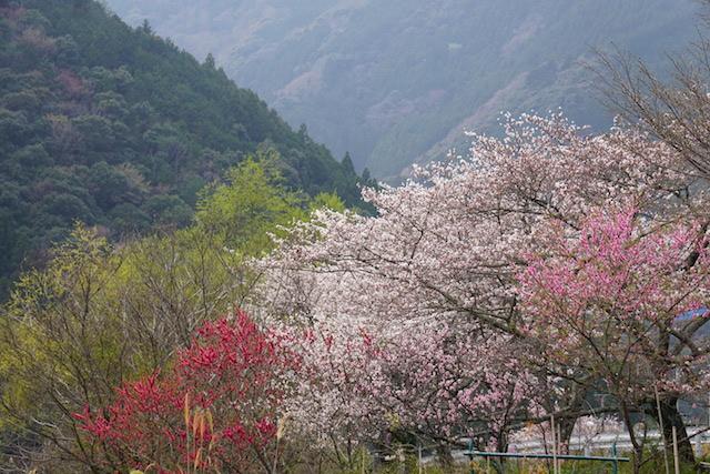 0329桜9