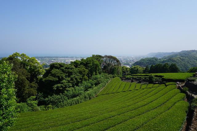 0601秋葉公園3