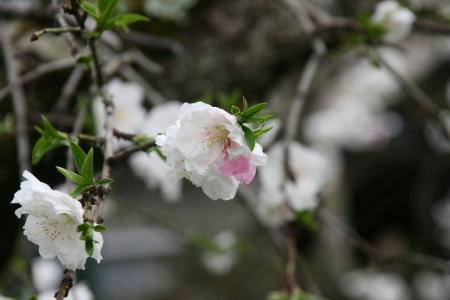 2010-04-11_53.jpg