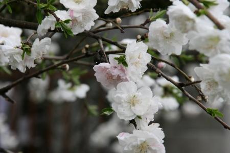 2010-04-11_55.jpg