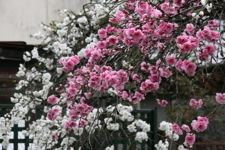 2010-04-11_65.jpg