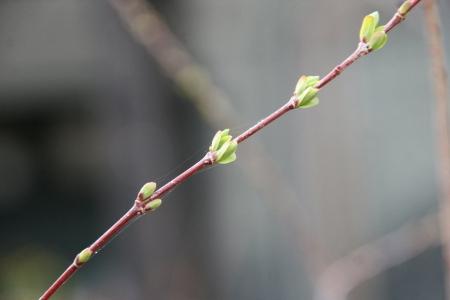 2014-03-19_18.jpg