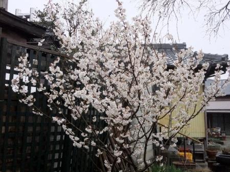 2014-03-26_02.jpg