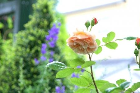 2014-05-26_38.jpg