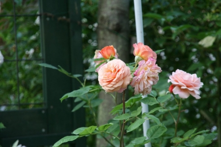 2014-05-29_78.jpg