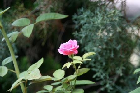 2014-07-23_50.jpg