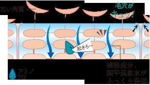 アミノ酸TGの役割