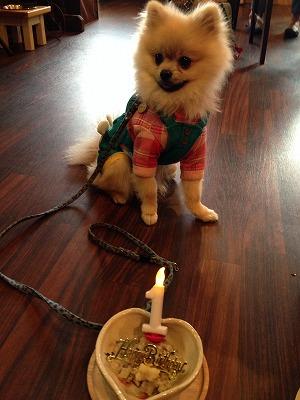 クッキーくん/Birthday Boyくん♪♪