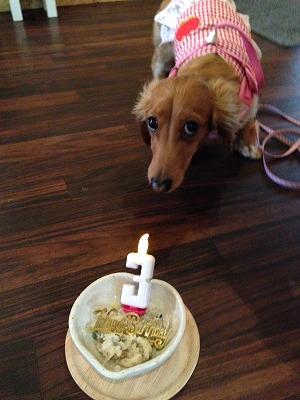 ウブちゃん/BirthdayGirlちゃん♪♪