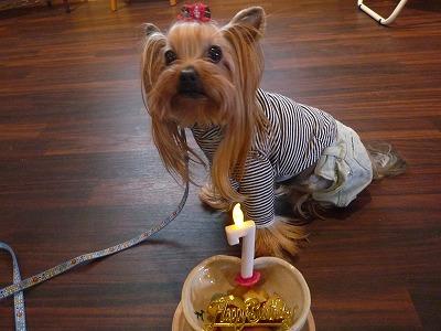 レオナルドくん/Birthday Boyくん♪