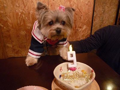 ミミィちゃん/BirthdayGirlちゃん♪