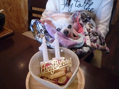 たんぽぽチャン/BirthdayGrilちゃん♪