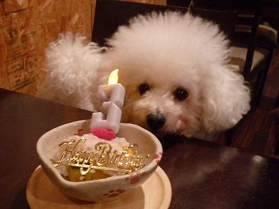 ウーマロくん/BirthdayBoyくん♪♪