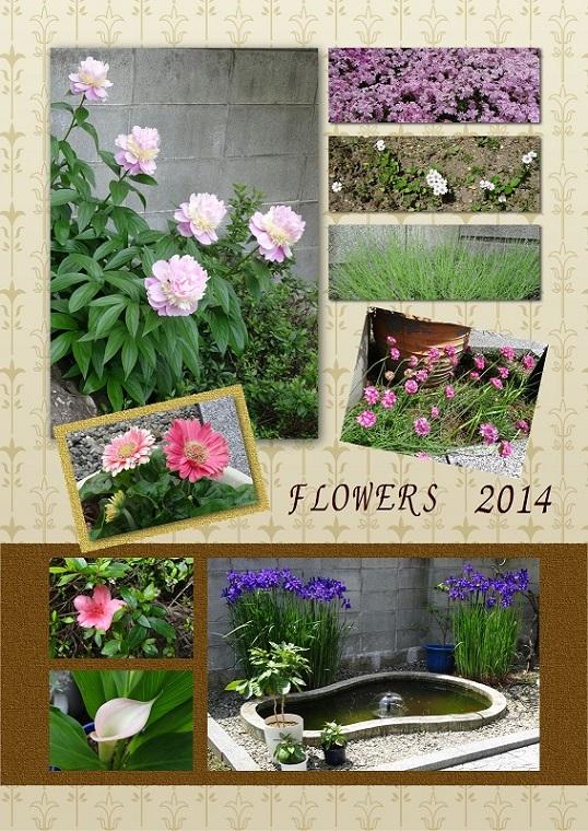 庭の花 50 95