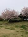 写真 2014-04-13 9 47 43
