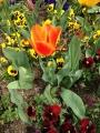 写真 2014-04-13 10 03 29