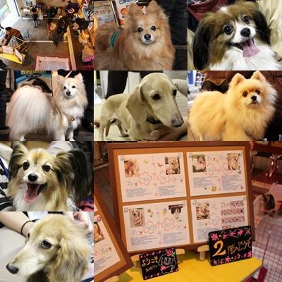 参加犬(ブログ用)2