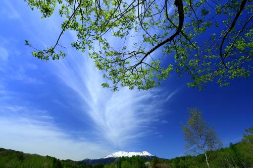 青空に向かって手を伸ばす若葉と雲