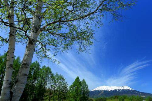 白銀の霊峰御岳を彩る雲と白樺の若葉