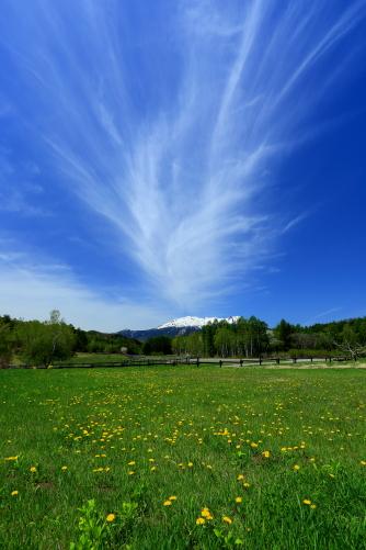 タンポポの草原にわく雲