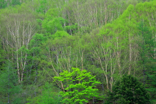 淡い若葉をまとう木々