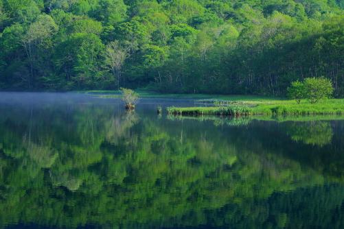 鏡池に映える対岸の新緑の森