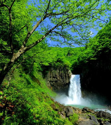 若葉の枝越しに望む名瀑・苗名滝
