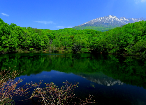 初夏の瑞々しい仙人池・背後は妙高山の一峰三田原山
