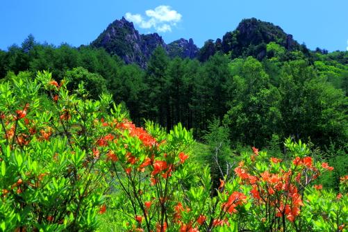 レンゲツツジの彩るみずがき山