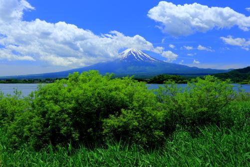 若葉の彩る河口湖畔から初夏の雲湧く富士山