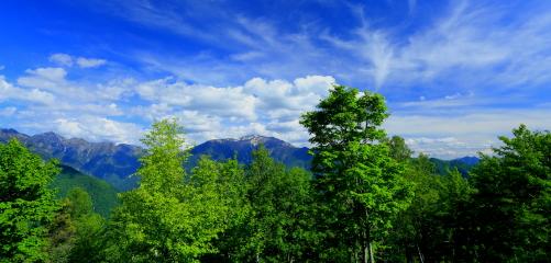 若葉の背後に東駒ヶ岳と仙丈ヶ岳