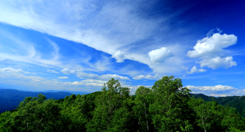 シラカバ林に雲流れる