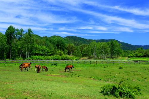 初夏の木曽駒牧場
