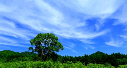 木立と青空にわく雲