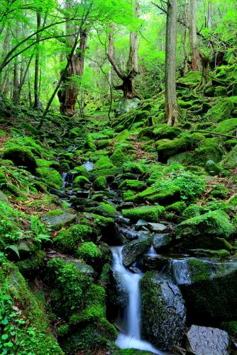 苔むす安山岩の大地に清流と原始の森