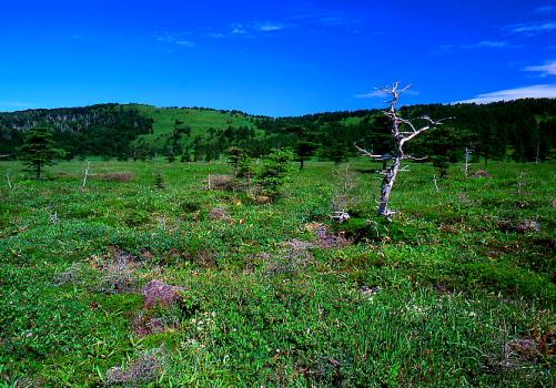 池ノ平湿原と三方ヶ峰