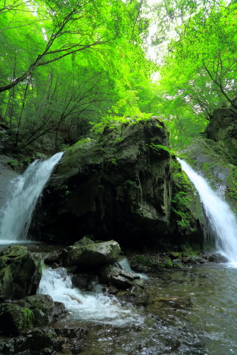 若葉の中を落水する乙女滝