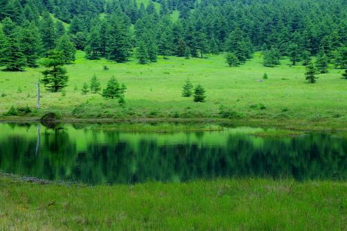 池の平湿原のシンボル・緑色鮮やかな鏡池