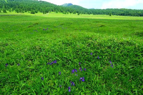 広大な湿原、標高約2000mの池の平湿原