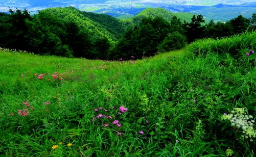 草原にさまざまな花が競い咲く