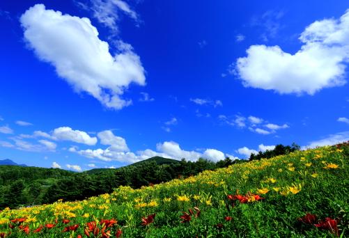 綿雲の浮かぶゆり園