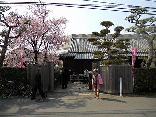 原田住宅桜 004