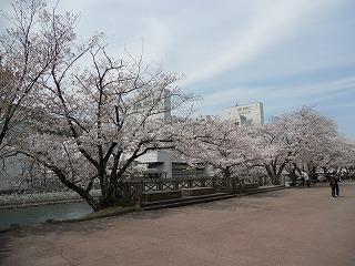 2014桜 003