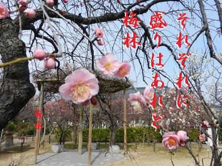 umebayashi.jpg