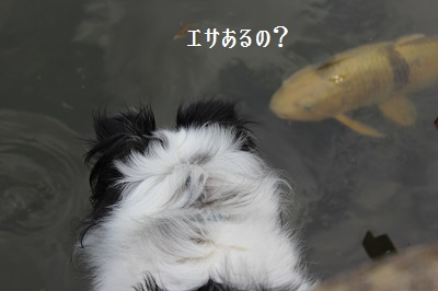 3376IMG_3376.jpg