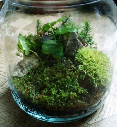 moss-garden1.jpg