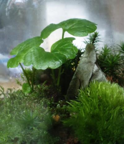 moss-garden4.jpg