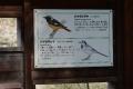 戸神調整池野鳥観察デッキDSC_3773s
