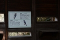 戸神調整池野鳥観察デッキDSC_3775